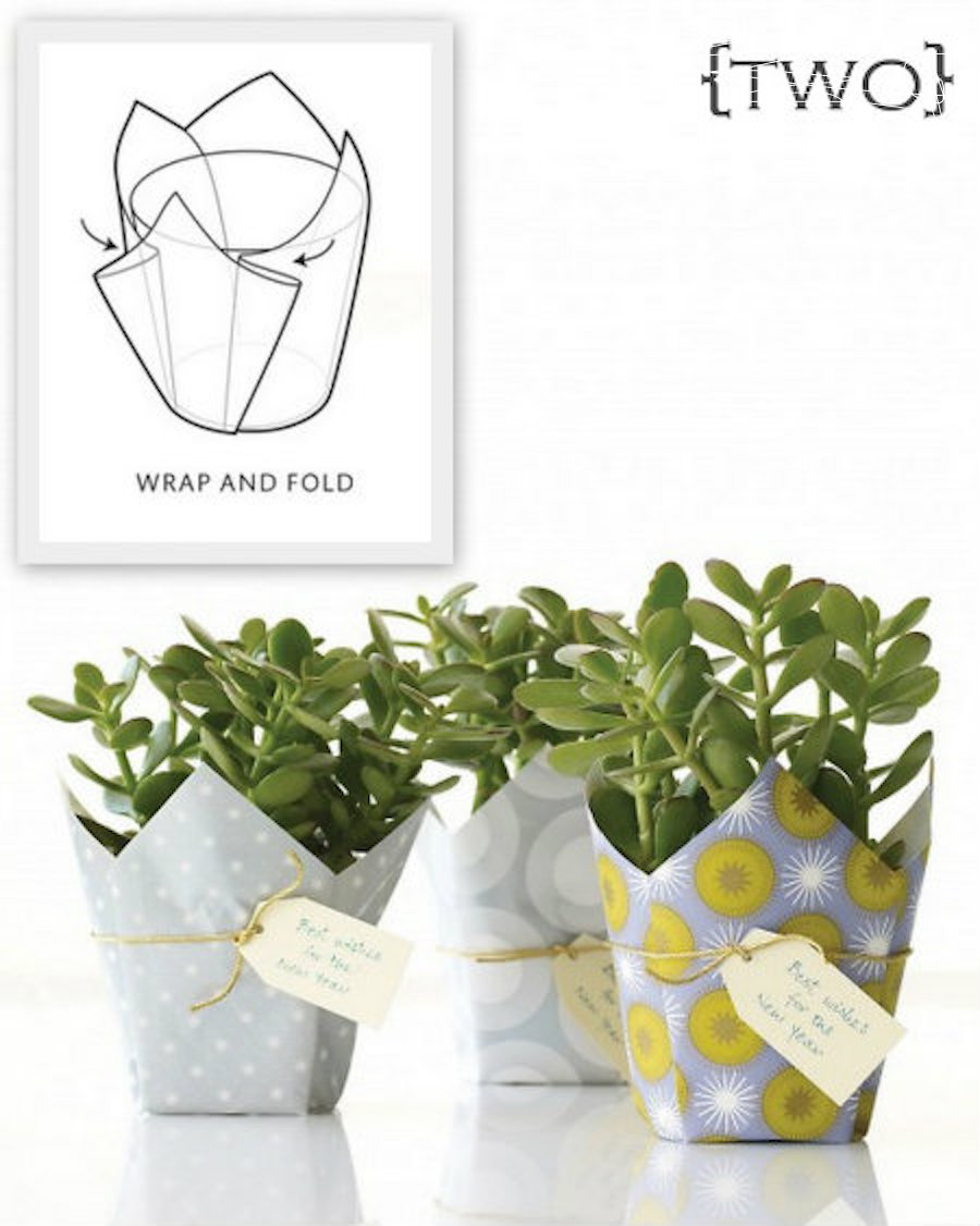 Plant packaging folded squares or scrapbook paper