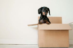 Choosing The Right Moving Boxes And Packing Supplies